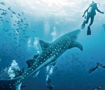 Dive-Galapagos-Islands-350x300