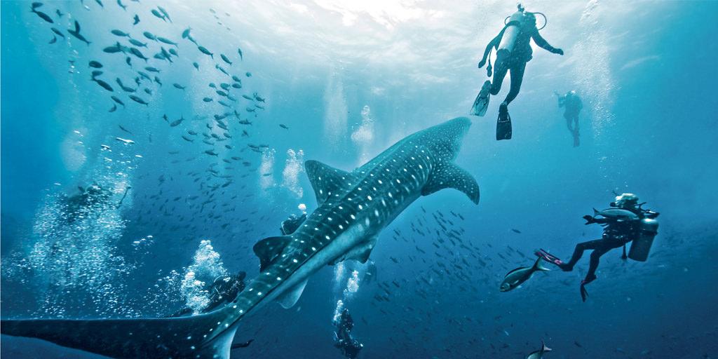 Dive Galapagos Islands