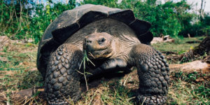 Galapagos Adventure Travel