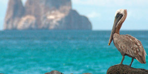 Galapagos Land Based Tour Package