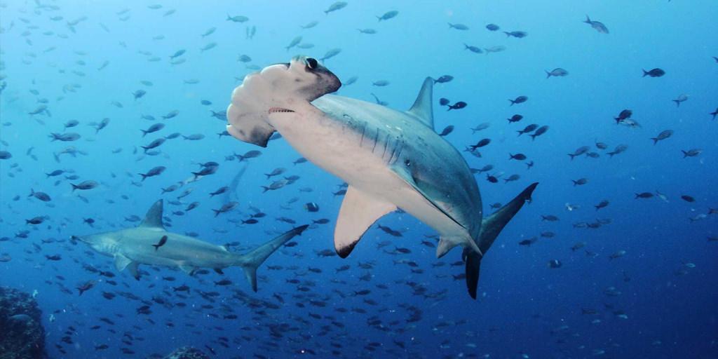 Galapagos Scuba Diving Tours