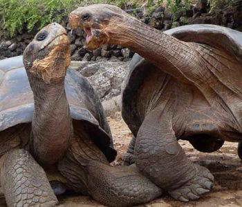 Travel Galapagos