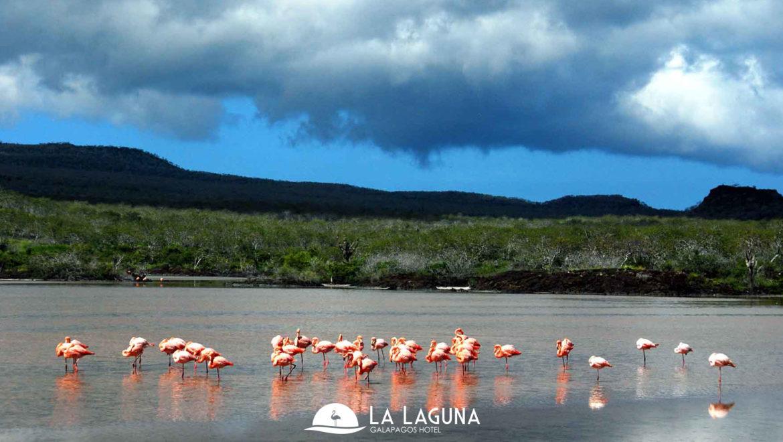 flamengos_la_laguna
